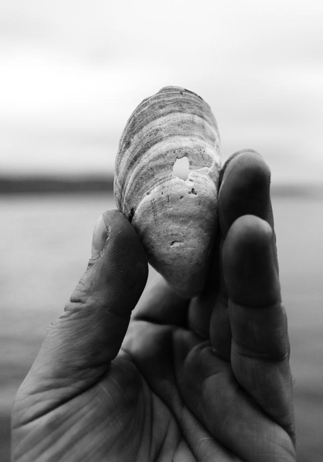 Sea-shell...